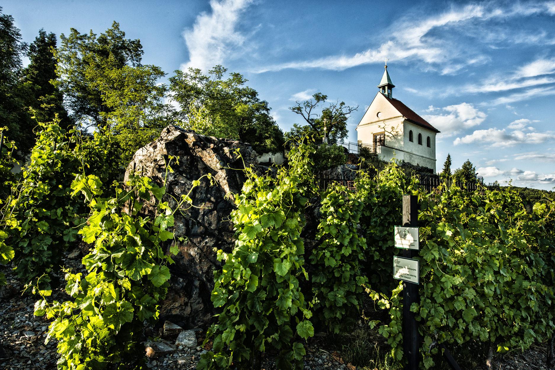 Самые красивые виноградники Праги. Дегустация чешских вин.